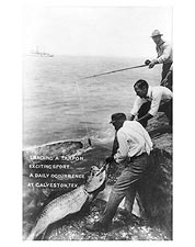Big Tarpon Fish Galveston Sport Fishing Photo Print for Sale