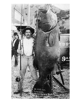Black Sea Bass World Record Giant Fish 1903 Photo Print