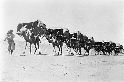 Camel Caravan of Pilgrims To Mecca 1910 Photo Print
