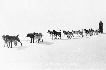Dogsled Race Team Alaska Sweepstakes 1914 Photo Print