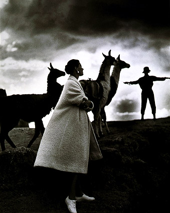 Fashion Model & llamas Peru Toni Frissell Photo Print