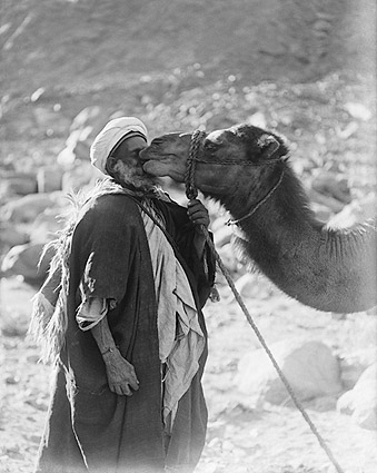 Funny Camel Kissing Red Sea Camel Love Photo Print