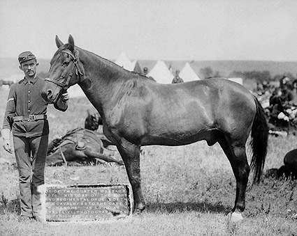General George Custer Horse That Survived Photo Print