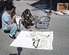 Ham the AstroChimp Looking Over Equipment Photo Print for Sale