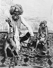 Indian Fakir Man & Monkeys India 1880 Photo Print for Sale