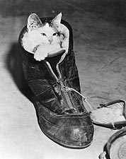Kitten Snuggled in a Boot, 1940s Photo Print for Sale