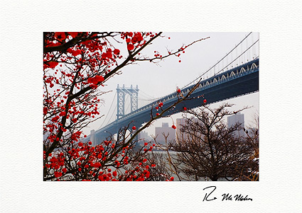 Manhattan Bridge Winter Berries Brooklyn Boxed Christmas Cards