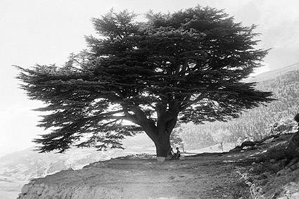 Mount Mar Sarkis & Cedar Tree Ehdin Lebanon Photo Print