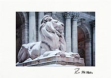 New York Public Library Lion Personalized New York City Christmas Cards