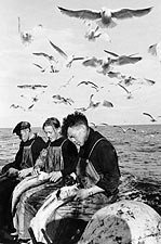 Norwegian Fishermen Stalked by Seagulls Photo Print for Sale