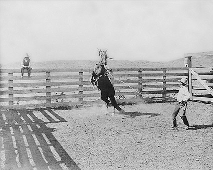 Old West Cowboy & Wild Bronco Texas Ranch Photo Print