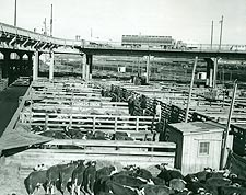 Omaha Stockyards Farmers Union Livestock Commission Photo Print for Sale