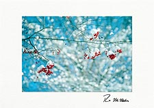 Personalized Christmas Cards by Robert McMahan