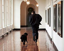President Barack Obama and Family Dog Bo in White House Photo Print for Sale