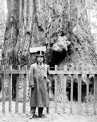 President Theodore Roosevelt at Big Tree Grove 1903 Photo Print