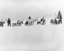Reindeer, Sleds & Drivers Alaska 1900 Photo Print for Sale