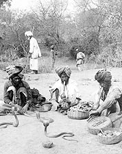 Snake Charmers and Hooded Cobras India 1903 Photo Print for Sale