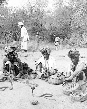 Snake Charmers and Hooded Cobras India 1903 Photo Print