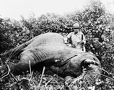 Teddy Roosevelt Africa Safari Elephant Hunt Photo Print for Sale