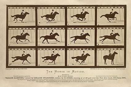 The Horse in Motion by Eadweard Muybridge Photo Print