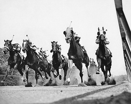Thoroughbred Horse Race at Belmont Track Photo Print