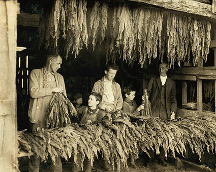 Tobacco Farmer Family Lewis Hine 1916 Photo Print