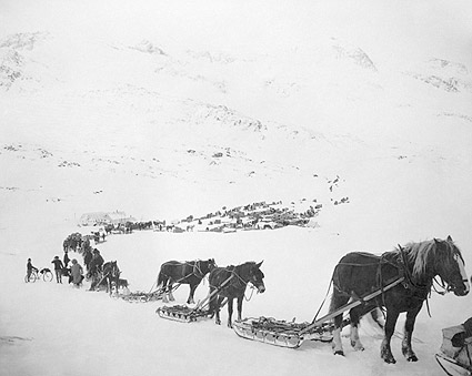 Train of Horses & Sleds Valdez Alaska 1900s Photo Print
