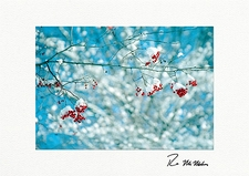 Winter Colors Christmas Holiday Boxed Greeting Cards