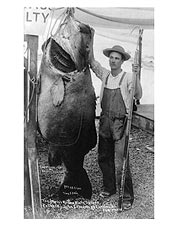 World Record Black Sea Bass Catalina Island 1905 Photo Print for Sale