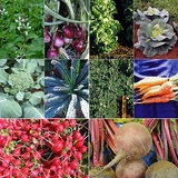 Cool-Season Vegetable Seed Collection