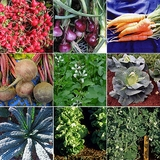 Cool-Season Vegetable Sampler