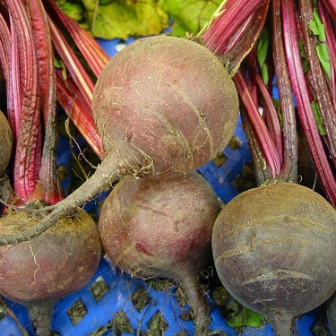 Early Blood Turnip-rooted Beet Seeds (Beta vulgaris cv.), Beet Seeds, Beets, Beet Seed, Seeds, Garden Seeds, Vegetable Seeds, Garden Supplies