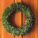 "English Boxwood 24"" Wreath"