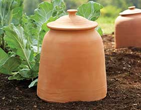 Monticello Sea Kale Pot