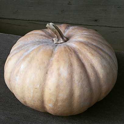 Long Island Cheese Winter Squash Seeds (Cucurbita moschata