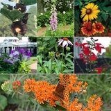 Monticello Birds Bees and Butterflies Seed Sampler