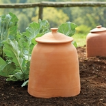 Monticello Terracotta Sea Kale Pot