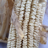 Virginia White Gourdseed Corn (<i>Zea mays</i> cv.)