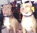 Dog Behavior and Training Articles