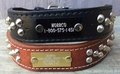 Leather Collar With Studs 1.5 in wide with Name Plate