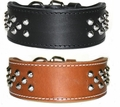 2 inch wide Leather Collar with Studs