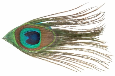"""5"""" Peacock Feather Hair Clip in Multiple Colors"""