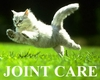 Joint Care for Cats
