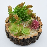 "Realistic Succulents Plant in 5"" Tree Trunk Pot - Table Centerpiece"