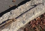 19th C. Antique Whaling Harpoon