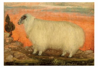 A Mountain Sheep Small Boxed Cards