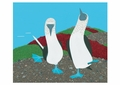 Blue-footed Booby Notecard