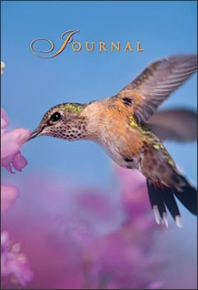 Broad-tailed Hummingbird Pocket Journal