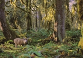 Deer in Forest Habitat Notecard