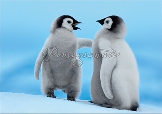 Emperor Penguin Chicks Christmas Cards